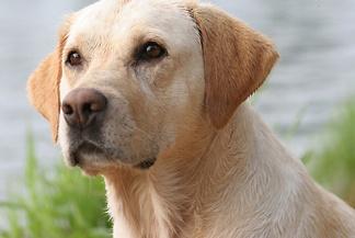 Dog-Photo